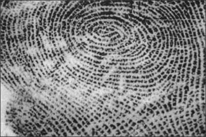 Physical Developer Fingerprints