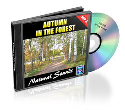 Relaxation Audio Sounds Autumn In The Forest