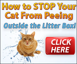 How to stop cats peeing outside the litter box